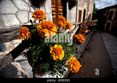 Floral display, Valldemossa, Mallorca - Stock Photo