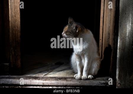 Old cat sat in a doorway, Valldemossa, Mallorca - Stock Photo