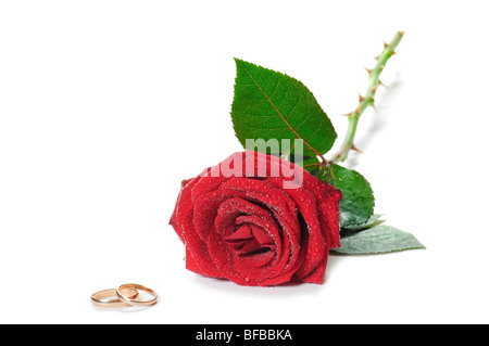 red beautiful rose and golden wedding rings - Stock Photo