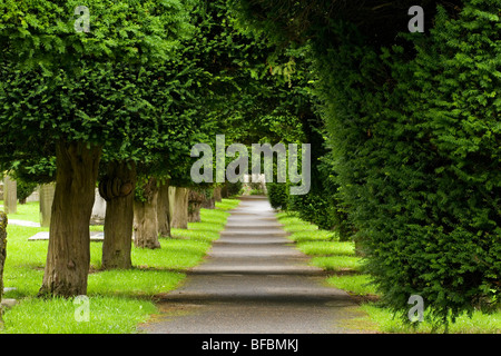 Avenue of yew trees in the churchyard of Painswick England - Stock Photo