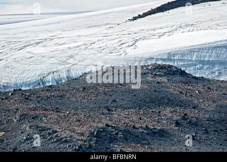 Colony of Adélie penguins bare rock ice sheet Antartica summer - Stock Photo