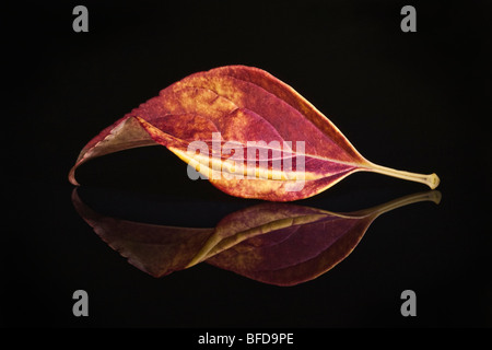 Colorful Autumn Leaf on reflective surface