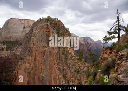 Hiker standing enjoys the view from Angel's Landing Trail, Zion National Park, Utah. - Stock Photo