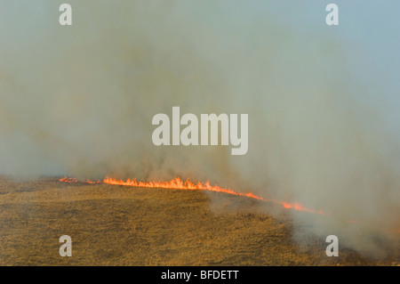 Aerial view of prairie grass fire Alberta Canada.. Dried winter grass ignites easily and fanned by wind quickly - Stock Photo