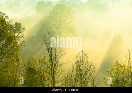 Morning sunlight filters through trees and mist over the Grand River near West Montrose, Ontario, Canada - Stock Photo