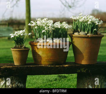 Close-up of snowdrops planted in old terracotta pots on wooden bench - Stock Photo