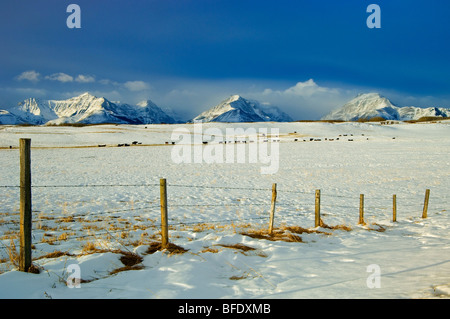 Snowy landscape where the prairies meet the mountains, near Twin Butte, Alberta, Canada - Stock Photo