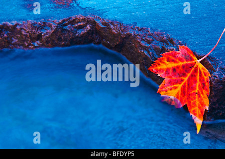 Red maple leaf on edge of rock in Chikinishing River, Killarney Provincial Park, Ontario, Canada - Stock Photo