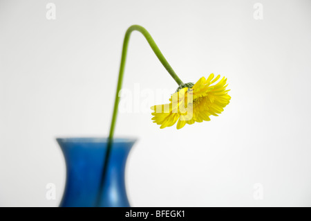 A bent yellow flower in a blue vase - Stock Photo