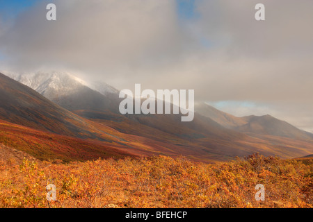 Autumn colours of the North Klondike Valley, Tombstone Territorial Park, Yukon, Canada - Stock Photo