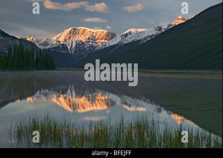 Mount Kitchener reflected in pond, Jasper National Park, Alberta, Canada - Stock Photo