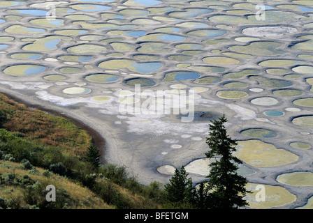 Spotted Lake near Osoyoos, British Columbia, Canada - Stock Photo