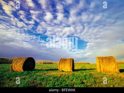 Bales in alfalfa field near Winnipeg, Manitoba, Canada - Stock Photo