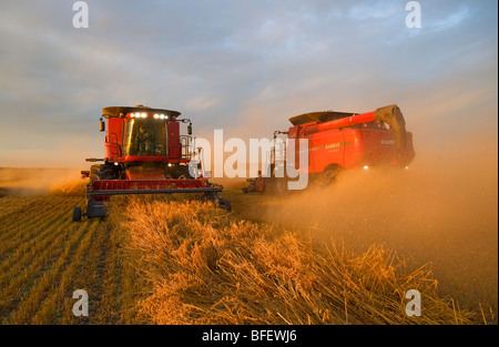 Two combines harvest swathed oats (Avena sativa) near Dugald, Manitoba, Canada - Stock Photo