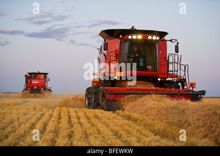 Two combines harvest spring wheat at dusk near Dugald, Manitoba, Canada - Stock Photo