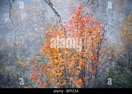 Fjell and birch forest in autumn with first snow and view over snowy forest - Stock Photo