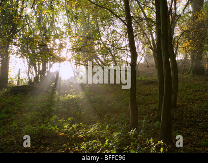 Rays of early morning sunlight streaming through tree branches. - Stock Photo
