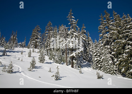 Spruce and fir trees covered with snow in winter in the Cascade Mountains of Oregon - Stock Photo
