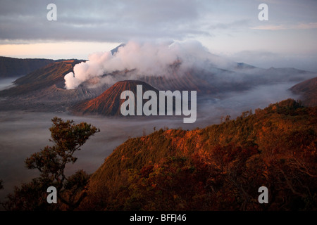 Mount Bromo and other volcanoes seen from Mount Penanjakan, Java island, Indonesia - Stock Photo