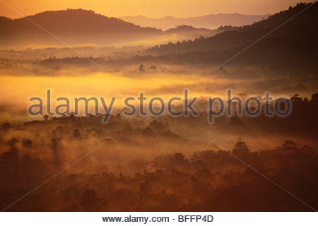 Rainforest at dawn (aerial), Cockscomb Basin, Belize - Stock Photo