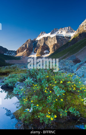 Wildflowers along lakeshore with Mount Fay in the background, Lower Consolation Lake, Banff National Park, Alberta, - Stock Photo