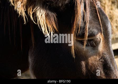 donkey stallion head - Stock Photo