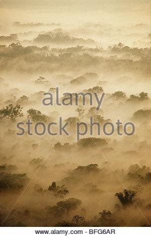 Morning clouds over lowland rainforest (aerial), Manu National Park, Peru - Stock Photo