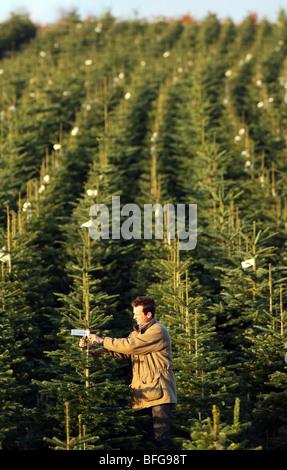 Christmas Tree Farm Eustis Fl