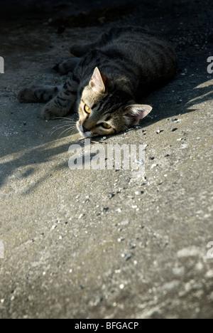 tabby kitten lying in shade - Stock Photo