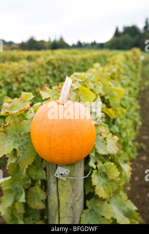 pumpkin on post at vineyards - Stock Photo