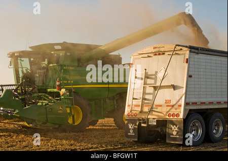 A combine harvester unloads soybeans into a grain truck during the harvest, La Salle, Manitoba, Canada - Stock Photo