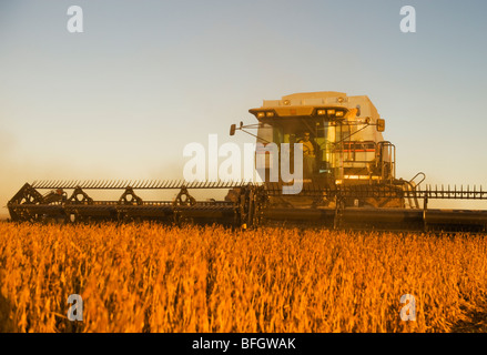 Combine harvester on soybean field in the early evening. Near Lorette, Manitoba, Canada - Stock Photo
