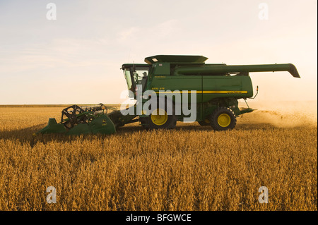 Combine harvester on soybean field in the early evening. Near La Salle, Manitoba, Canada - Stock Photo