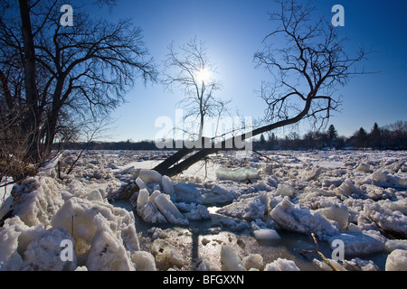 Ice Jam on the Red River, during 2009 flood.  Winnipeg, Manitoba, Canada. - Stock Photo