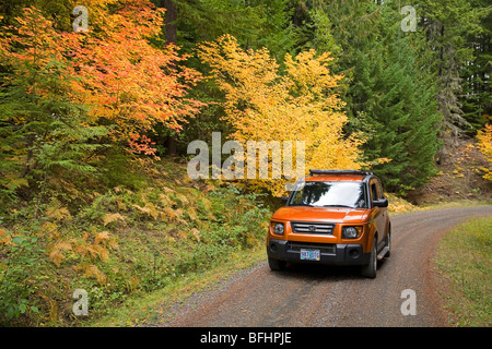 Leaf peepers view vine maple turning color during the october autumn color change in the Cascade Mountains of Oregon - Stock Photo
