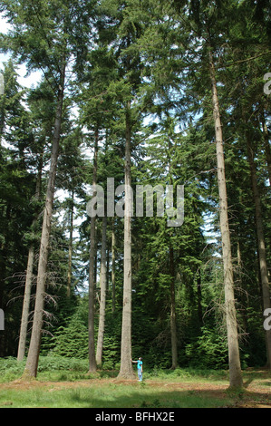 woman beside pine tree, New Forest, Hampshire, England, UK - Stock Photo