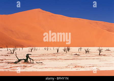 Dead tree skeletons and cracked clay surrounded by sand dunes Dead Vlei Namib-Naukluft National Park Namib Desert - Stock Photo