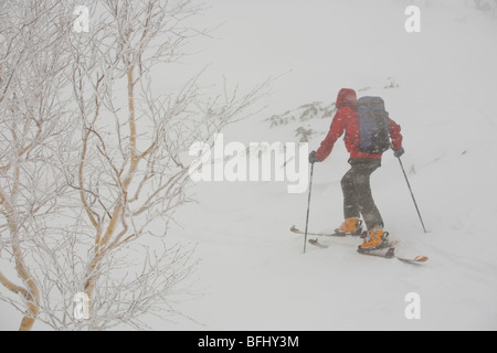 A skier uptracking in snowy conditions in Furanodake backcountry, Hokkaido, Japan - Stock Photo