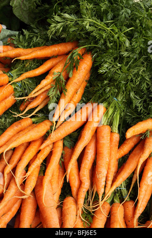 Fresh organic carrots bunch with carrot tops on sale at Borough Market Southwark London - Stock Photo