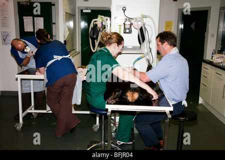 The Busy Prep Room in a Veterinary Clinic in the UK - Stock Photo