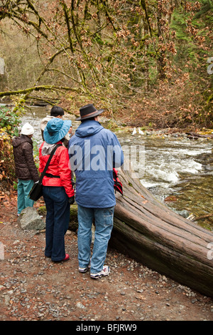 Salmon Spawn Vancouver Island