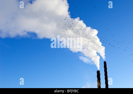 Smoke from chimneys against a blue sky, Sweden. - Stock Photo