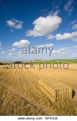 Straw bales in sunny wheat field - Stock Photo