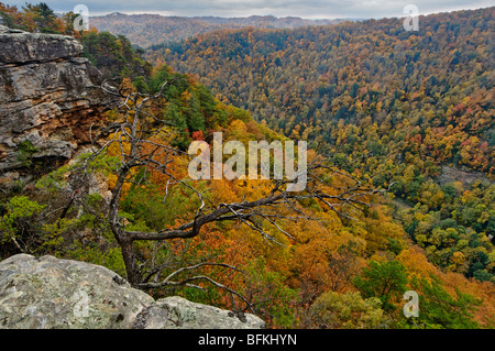 Autumn Color on Mountainside in Breaks Interstate Park in Virginia - Stock Photo