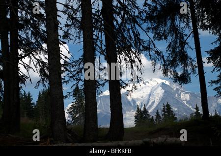 The Mont Blanc seen between Firs at 'Le Jaillet' (Megève,France) in August - Stock Photo