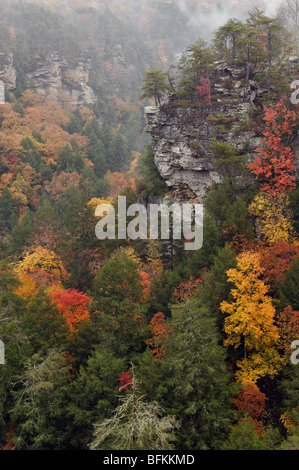 Mist and Autumn Color in Fall Creek Falls State Park in Tennessee - Stock Photo
