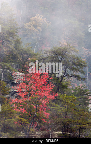 Autumn Color and Fog in Fall Creek Falls State Park, Tennessee - Stock Photo