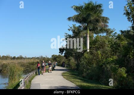 The Anhinga Trail, Royal Palm, Everglades National Park, Florida, USA - Stock Photo