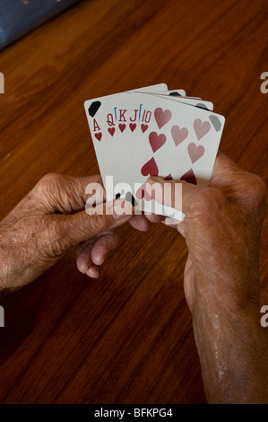seniors hands holding a winning playing card hand of a straight flush of hearts - Stock Photo
