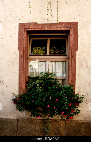 Window in stone wall with flower box - Stock Photo